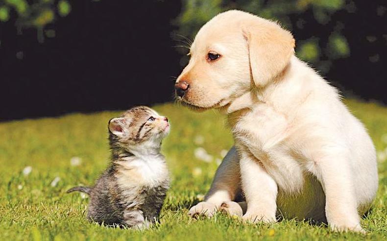 World Animal Day October 4